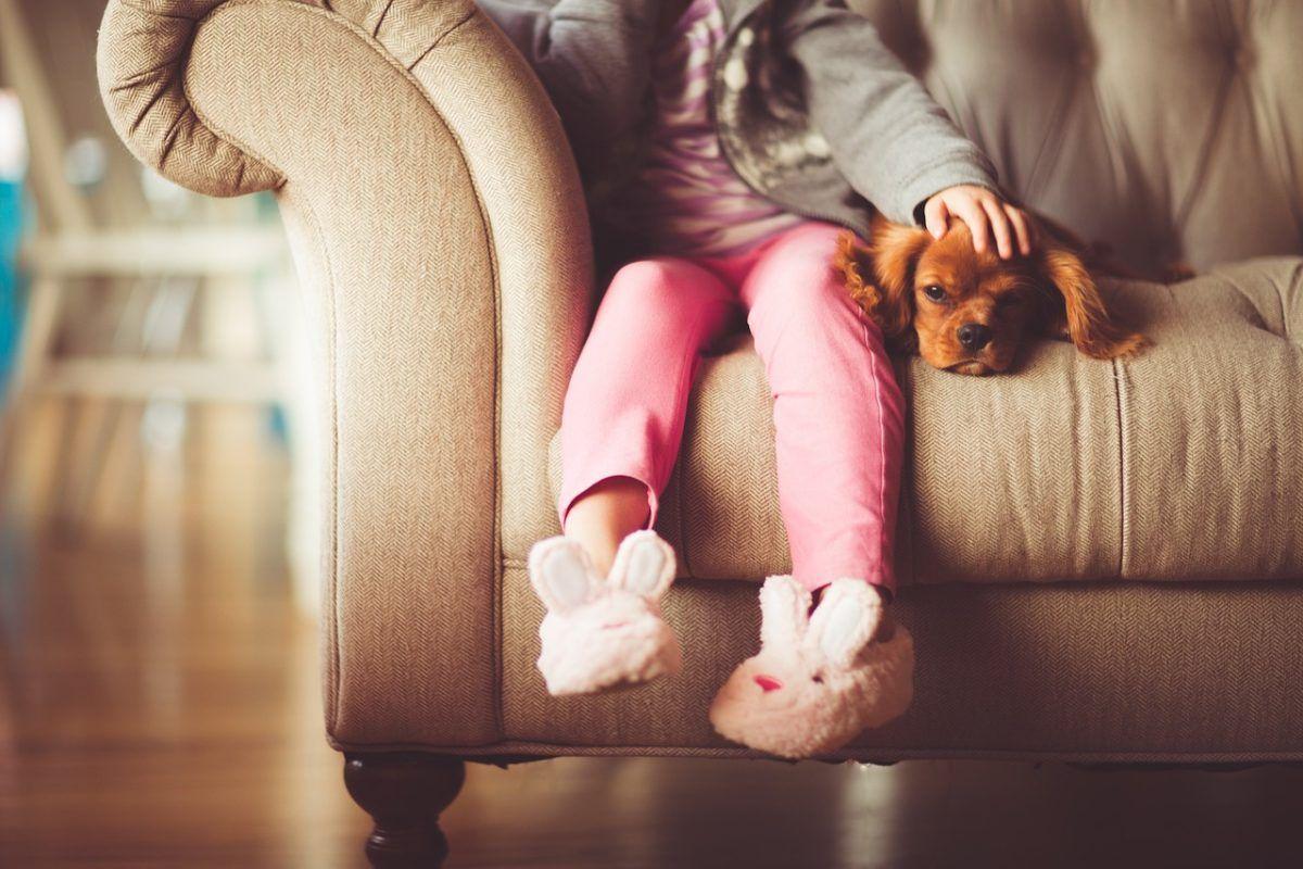 Как забрать при разводе у мужа собаку – поможет юрист